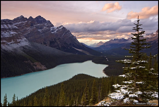 - Light dusting of snow on a pine tree and Mt. Patterson, above Peyto Lake at sunset, Banff NP, Canada -