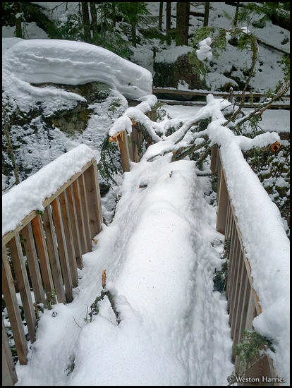 - Fallen Tree Breaking the Avalanche Gorge Bridge in Winter, Glacier NP -