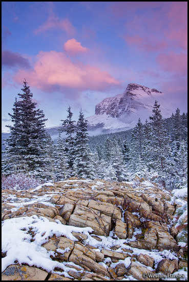 - Wynn Mountain at Sunset, Glacier NP -