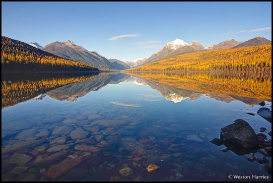 - Golden Larch Trees and Mountain Peaks Reflected in Bowman Lake, Glacier NP -