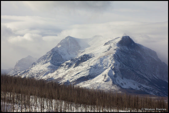 - Burned Forest and Snow Covered Mountain, Glacier NP -