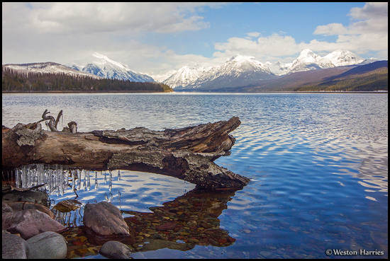 - Icicles Dripping off a Log on the Shore of Lake McDonald, Glacier NP -