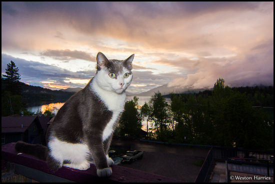 - Fritzy Perched Above Whitefish Lake at Sunset, Glacier NP -