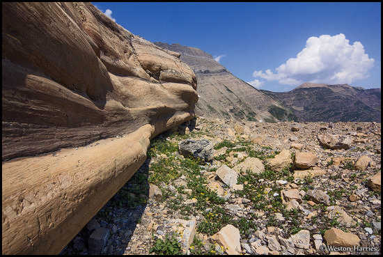 - Glacially Smoothed Rock Wall, Glacier NP -