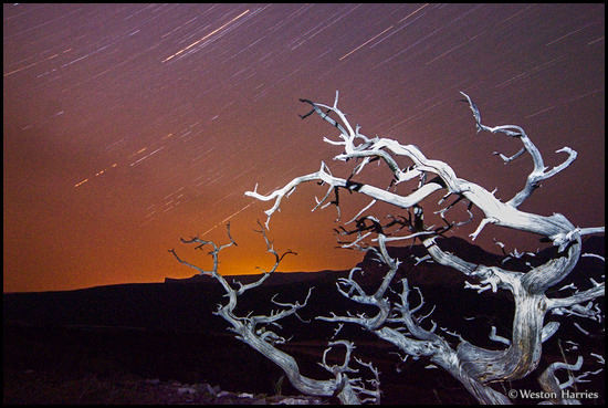 - Whitebark Pine Under the Stars, Glacier NP -