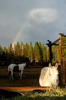 - Rainbow Over Horses in the Colter Bay Corrals, Grand Teton NP -