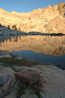 - Wildflowers Growing Along Upper Crystal Lake, Late Afternoon, Mineral King Area, Sequoia NP -